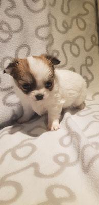 Schon 5 Wochen alt die kleine Enja