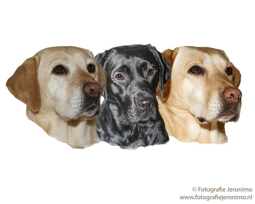 Fotografie, Jeronimo, Roosendaal, Brabant, dierenfotografie, dierenfotograaf, hondenfotografie, hondenfotograaf, portretfotografie, portretfotograaf, hond, 31