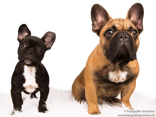 Fotografie, Jeronimo, Roosendaal, Brabant, dierenfotografie, dierenfotograaf, hondenfotografie, hondenfotograaf, portretfotografie, portretfotograaf, hond, 17