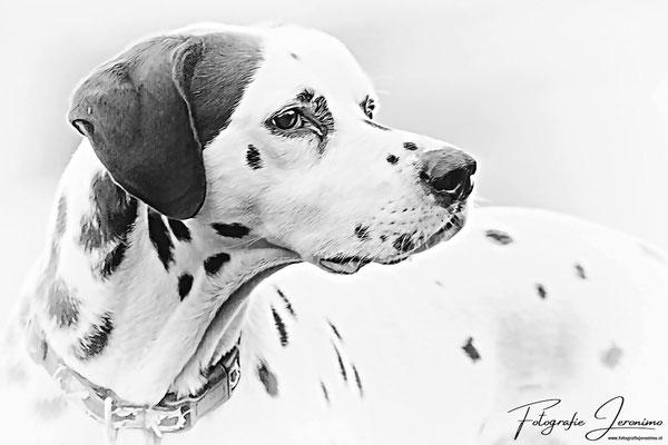 Fotografie, Jeronimo, Roosendaal, Brabant, dierenfotografie, dierenfotograaf, hondenfotografie, hondenfotograaf, portretfotografie, portretfotograaf, hond, 25