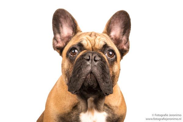 Fotografie, Jeronimo, Roosendaal, Brabant, dierenfotografie, dierenfotograaf, hondenfotografie, hondenfotograaf, portretfotografie, portretfotograaf, hond, 11