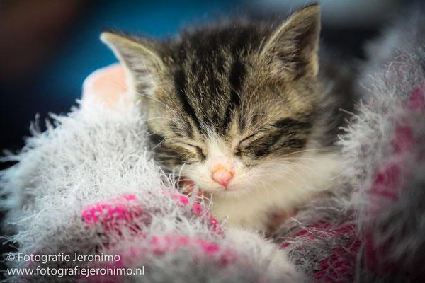 Fotografie, Jeronimo, Roosendaal, Brabant, dierenfotografie, dierenfotograaf, kattenfotografie, kattenfotograaf, portretfotografie, portretfotograaf, kat, 41