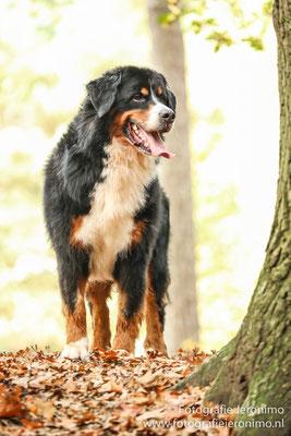 Fotografie, Jeronimo, Roosendaal, Brabant, dierenfotografie, dierenfotograaf, hondenfotografie, hondenfotograaf, portretfotografie, portretfotograaf, hond, 5