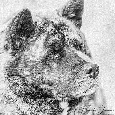 Fotografie, Jeronimo, Roosendaal, Brabant, dierenfotografie, dierenfotograaf, hondenfotografie, hondenfotograaf, portretfotografie, portretfotograaf, hond, 28