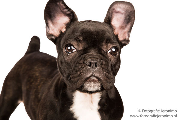 Fotografie, Jeronimo, Roosendaal, Brabant, dierenfotografie, dierenfotograaf, hondenfotografie, hondenfotograaf, portretfotografie, portretfotograaf, hond, 15