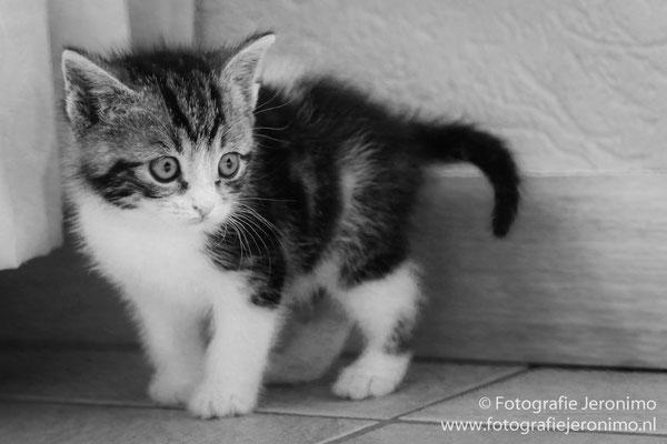 Fotografie, Jeronimo, Roosendaal, Brabant, dierenfotografie, dierenfotograaf, kattenfotografie, kattenfotograaf, portretfotografie, portretfotograaf, kat, 43