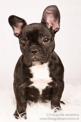 Fotografie, Jeronimo, Roosendaal, Brabant, dierenfotografie, dierenfotograaf, hondenfotografie, hondenfotograaf, portretfotografie, portretfotograaf, hond, 12