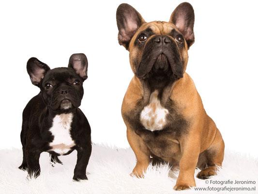 Fotografie, Jeronimo, Roosendaal, Brabant, dierenfotografie, dierenfotograaf, hondenfotografie, hondenfotograaf, portretfotografie, portretfotograaf, hond, 16