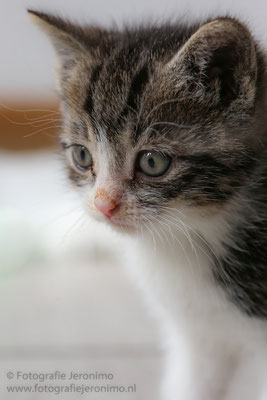 Fotografie, Jeronimo, Roosendaal, Brabant, dierenfotografie, dierenfotograaf, kattenfotografie, kattenfotograaf, portretfotografie, portretfotograaf, kat, 44