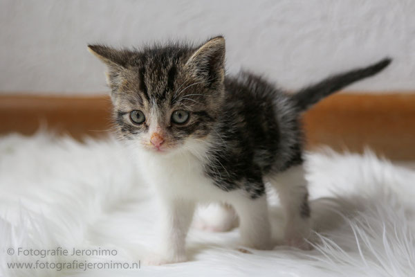 Fotografie, Jeronimo, Roosendaal, Brabant, dierenfotografie, dierenfotograaf, kattenfotografie, kattenfotograaf, portretfotografie, portretfotograaf, kat, 42