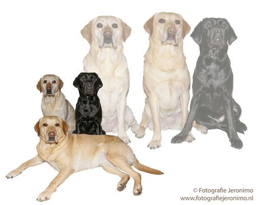 Fotografie, Jeronimo, Roosendaal, Brabant, dierenfotografie, dierenfotograaf, hondenfotografie, hondenfotograaf, portretfotografie, portretfotograaf, hond, 32