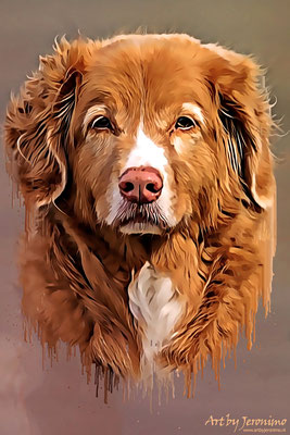 Fotografie, Jeronimo, Roosendaal, Brabant, dierenfotografie, dierenfotograaf, hondenfotografie, hondenfotograaf, portretfotografie, portretfotograaf, hond, 27