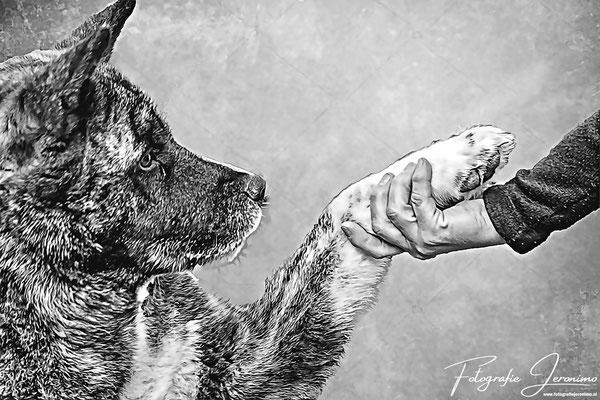 Fotografie, Jeronimo, Roosendaal, Brabant, dierenfotografie, dierenfotograaf, hondenfotografie, hondenfotograaf, portretfotografie, portretfotograaf, hond, 29
