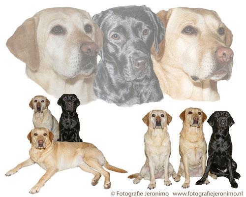 Fotografie, Jeronimo, Roosendaal, Brabant, dierenfotografie, dierenfotograaf, hondenfotografie, hondenfotograaf, portretfotografie, portretfotograaf, hond, 33
