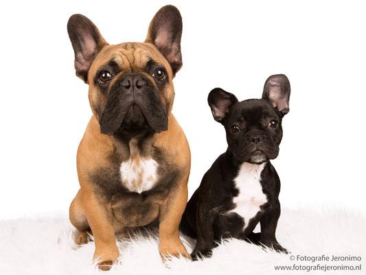 Fotografie, Jeronimo, Roosendaal, Brabant, dierenfotografie, dierenfotograaf, hondenfotografie, hondenfotograaf, portretfotografie, portretfotograaf, hond, 19