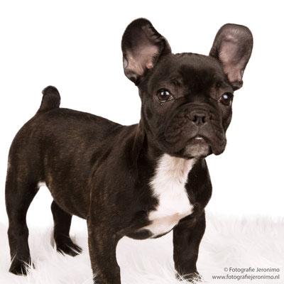 Fotografie, Jeronimo, Roosendaal, Brabant, dierenfotografie, dierenfotograaf, hondenfotografie, hondenfotograaf, portretfotografie, portretfotograaf, hond, 14