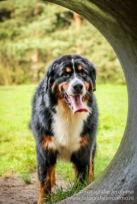 Fotografie, Jeronimo, Roosendaal, Brabant, dierenfotografie, dierenfotograaf, hondenfotografie, hondenfotograaf, portretfotografie, portretfotograaf, hond, 6