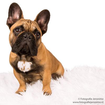 Fotografie, Jeronimo, Roosendaal, Brabant, dierenfotografie, dierenfotograaf, hondenfotografie, hondenfotograaf, portretfotografie, portretfotograaf, hond, 13