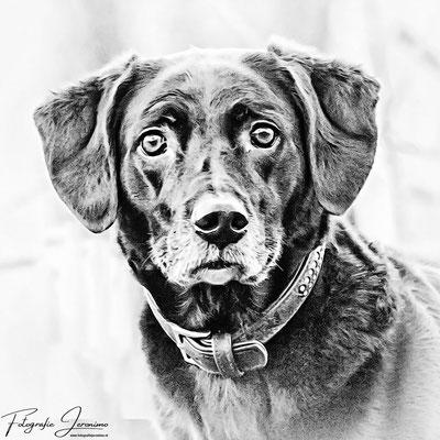 Fotografie, Jeronimo, Roosendaal, Brabant, dierenfotografie, dierenfotograaf, hondenfotografie, hondenfotograaf, portretfotografie, portretfotograaf, hond, 30