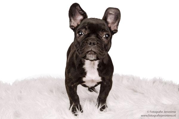 Fotografie, Jeronimo, Roosendaal, Brabant, dierenfotografie, dierenfotograaf, hondenfotografie, hondenfotograaf, portretfotografie, portretfotograaf, hond, 20