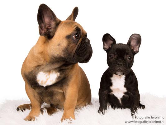 Fotografie, Jeronimo, Roosendaal, Brabant, dierenfotografie, dierenfotograaf, hondenfotografie, hondenfotograaf, portretfotografie, portretfotograaf, hond, 18