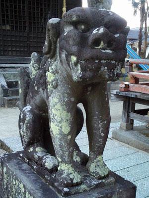 本庄神社の狛犬【吽形】アップの写真