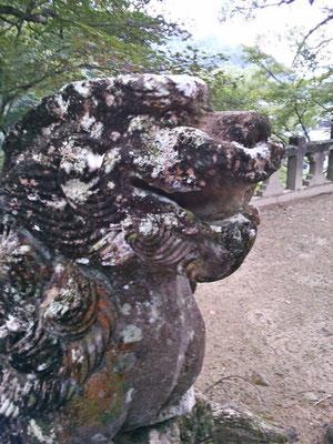 陶山神社の狛犬05番【阿形】アップの写真