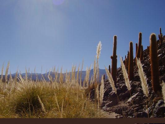 Typische Hochgebirgs-Graslandschaft bei La Paz