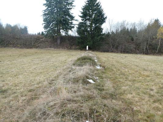 Eine Waldhufe ist das langgestreckte Grundstück einer Siedlerfamilie . Foto: Inge Steidl