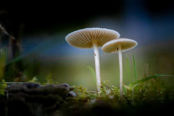 Inge Straub:  Pilze