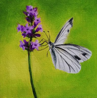 Schmetterling auf Gün