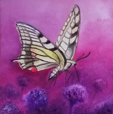 Schmetterling - Schwalbenschwanz I