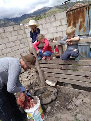 Wir durften bei der Schweineschlachtung von Tielmanns mitmachen und die Kinder bekamen von Thomas Anatomieunterricht.