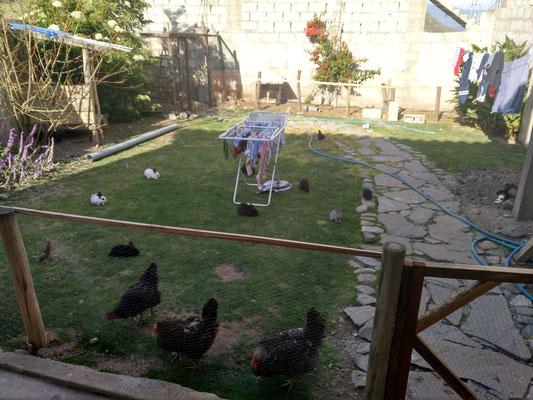 Chaos im Garten. Wir lieben es.