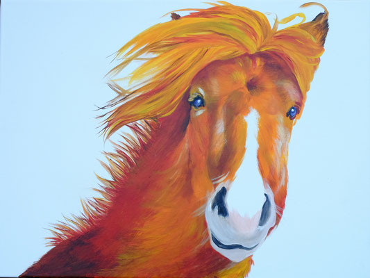 """2014 """"Come play outside: A little horse on Iceland"""". Acrylic-paint on linen 60 x 80 cm."""