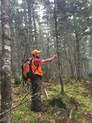 Jed hangs a flag during a trail design and layout project near Kokadjo, ME, 2014