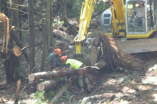 Fred and Jed chain up two trunks with root balls for transport to the work site