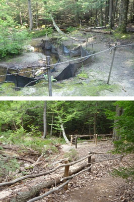 The stream bank before and after restoration