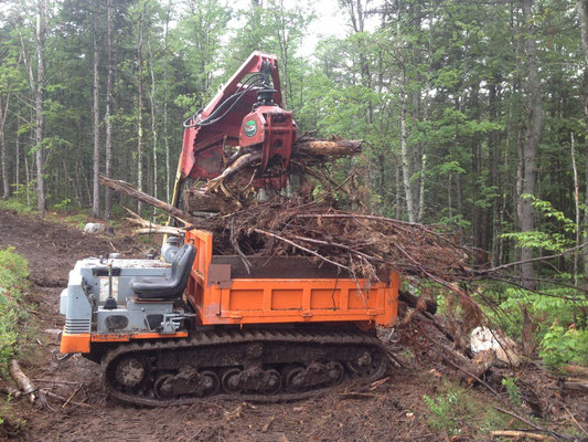 Slash from a previous logging job was removed from the trail corridor and used to restore impacted areas