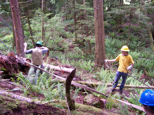Salvaging fallen timber, SCA rigging workshop, North Bend, WA, 2006