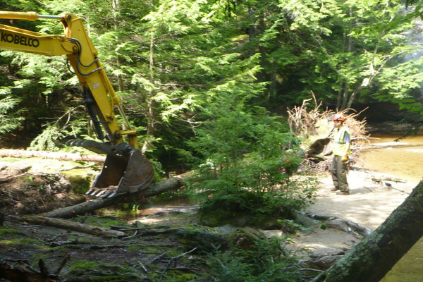 The first trunk gets pulled into the eroding stream bank