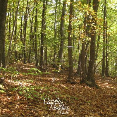 Foresta del Chianti • Chianti forest