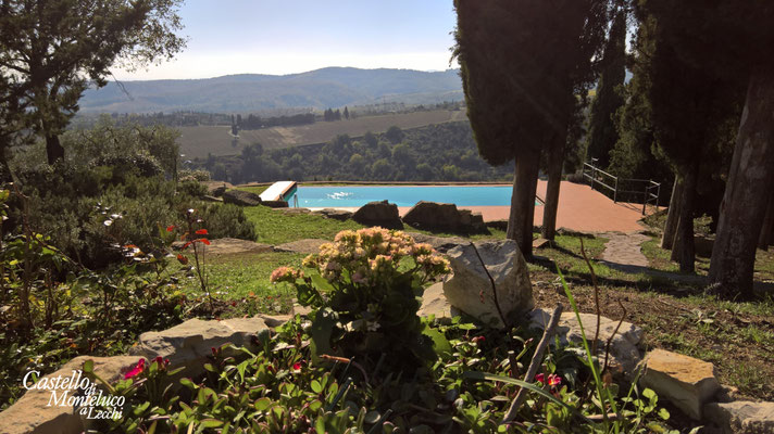 Fiori guardano la piscina • Flowers look at the pool