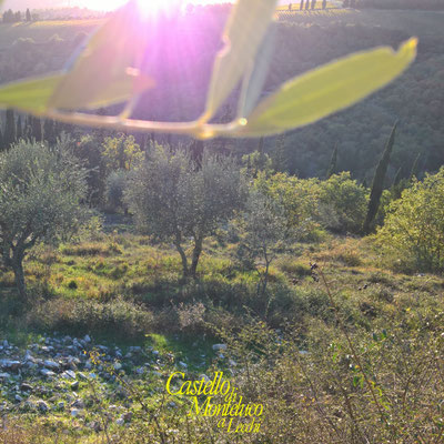 «Yellow» Autumn in Chianti [Castello di Monteluco®]
