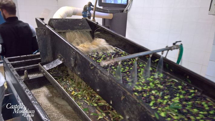 Lavaggio e pulizia • The olives are washed, cleaned