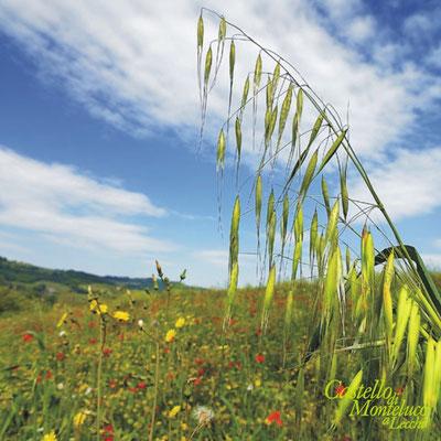 Panorama di primavera • Landscape spring [Piero Farolfi]