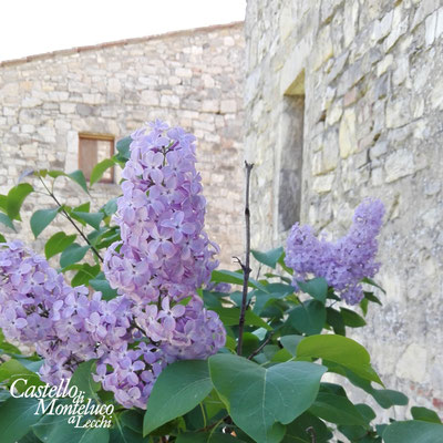 Colore viola sulla pietra • Purple color on the stone