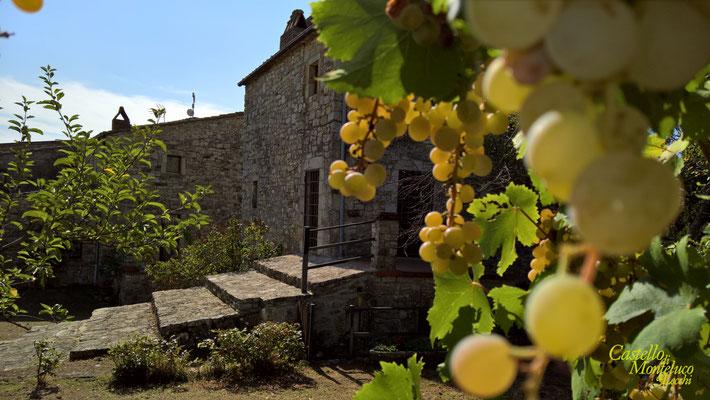 Il Nibbio dal giardino privato | Il nibbio from the private garden