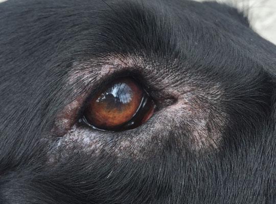 Rechtes Auge, Bild vom 31.3.2015