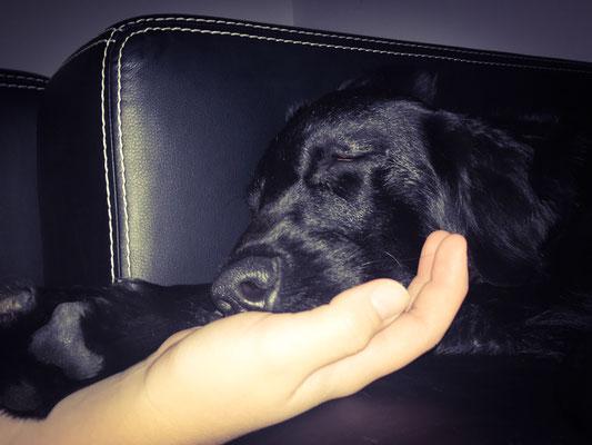Eingeschlafen auf meiner Hand ❤